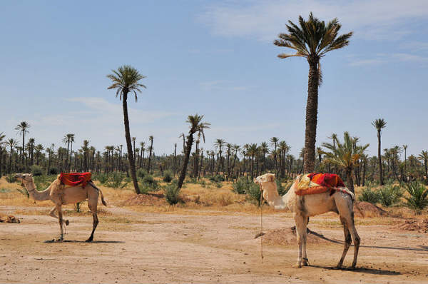 La_Palmeraie_de_Marrakech